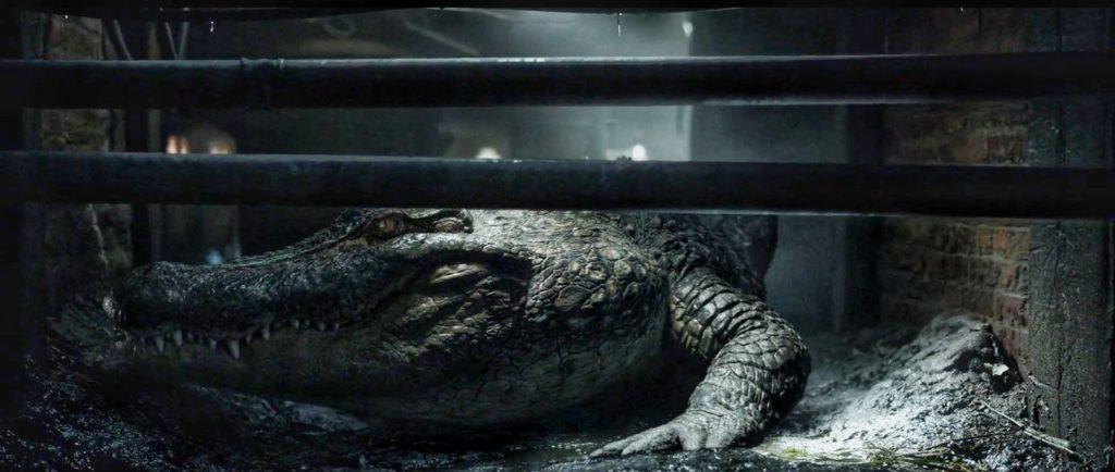 Alligator avis et critique film Crawl Nuit d'Horreur